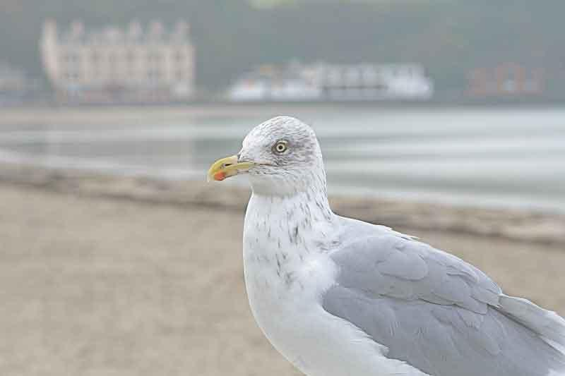 The biggest problem with seagulls is that they don't abide by the