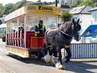 Significant increase in Horse Tramway passengers this year