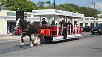 Horse trams to suspend services at key TT times