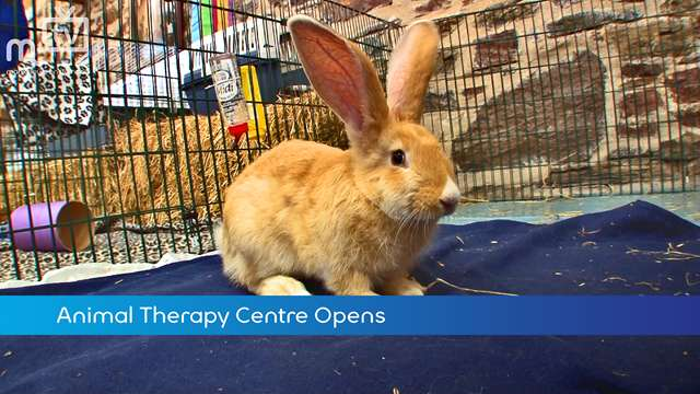 Preview of - Animal Therapy Centre Opens
