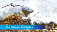 MTTV archive: Seal released