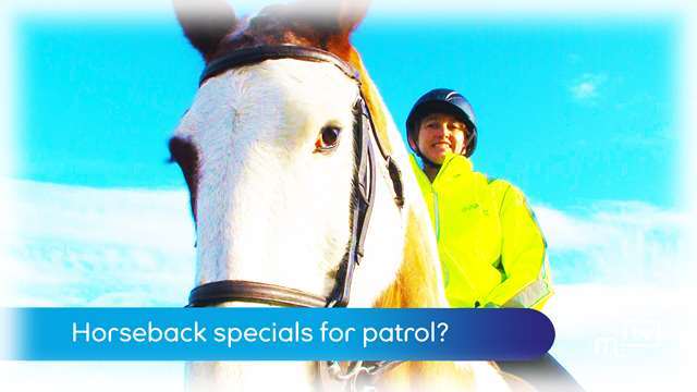 Preview of - Horseback specials for patrol?