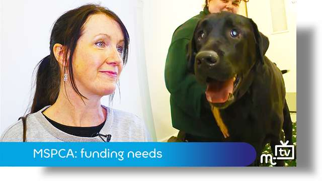 Preview of - MSPCA: funding needed