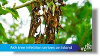 Ash tree infection reaches Island