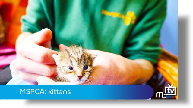 Preview of - MSPCA: kittens