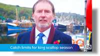Catch limits for king scallop season