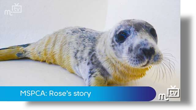 Preview of - MSPCA: Rose's story