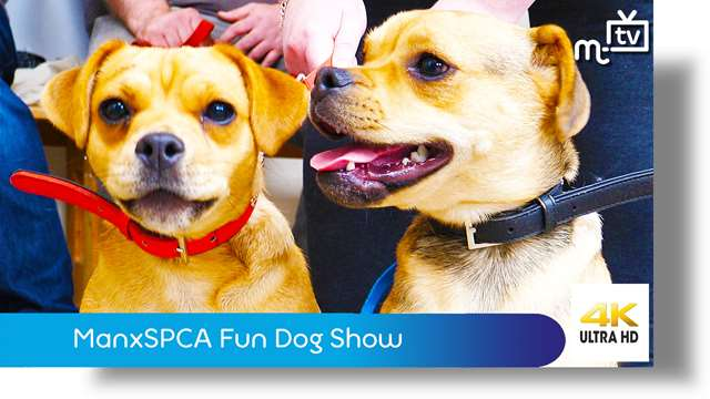 Preview of - ManxSPCA Fun Dog Show