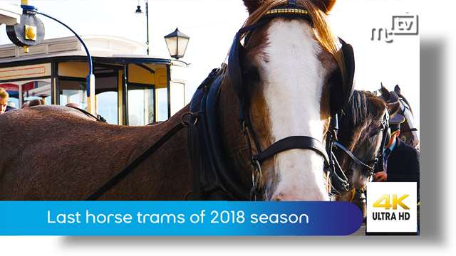 Preview of - Last horse trams of 2018 season